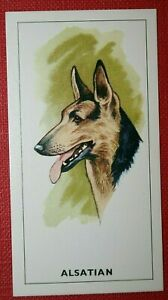 ALSATIAN-German-Shepherd-Original-1963-Vintage-Colour-Card
