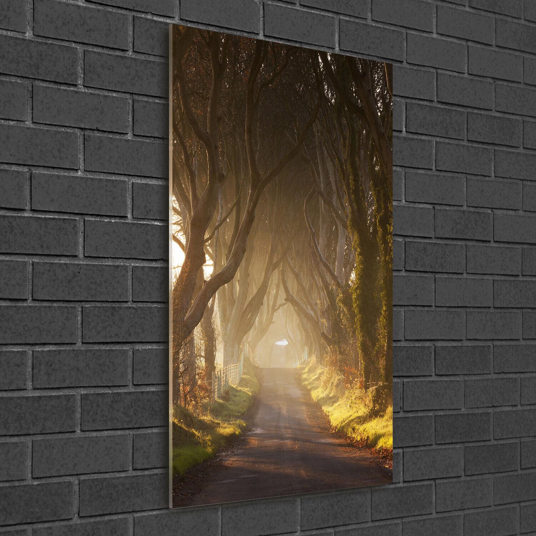 Immagine muro ARTE-STAMPA su duro-vetro ad alta Kant 50x100 percorso nel bosco