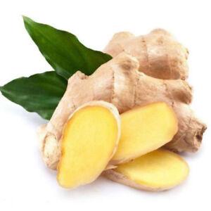 Ginger-Seeds-Balcony-Vegetables-Potted-Bonsai-Plant-Seeds-Four-Seasons-Zingiber
