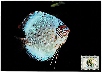 Aufrichtig Diskusfisch Schmuckblatt 1.2 Attraktive Designs;