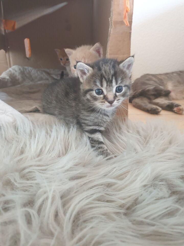 Flere killinger, Huskat, 8 uger