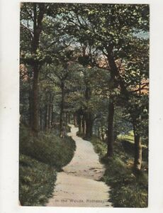 In-The-Woods-Rothesay-Bute-1905-Postcard-443b