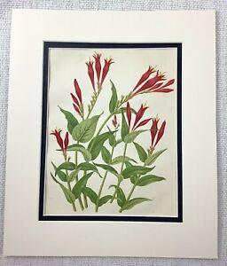 1877 Antico Botanico Stampa Rosso Worm Erba Fiori Floreale Cromolitografia