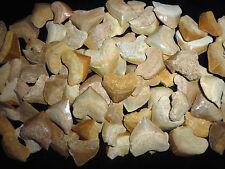20 Fossilie Squalicorax Haizähne Marokko megalodon Großvater era Haizahn