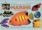 An Essential Guide to Choosing Your Marine Tropical Fish: A Detailed Survey of Over 60 Marine Fish Suitable for a First Collection by Dick Mills (Hardback, 2001)