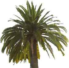 10 CANARY ISLAND DATE PALM Phoenix Reclinata Canariensis Tree Seeds *Comb S/H