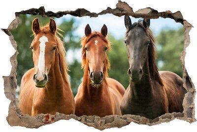 Pferd In 3d Ansehen