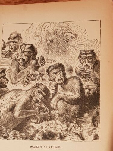 Antique Book Print By Harrison Weir Monkeys At Picnic 1894