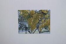 5 Semi Cassia fistola,indiano Pioggia dorata,Pioggia-albero d'oro, # 106