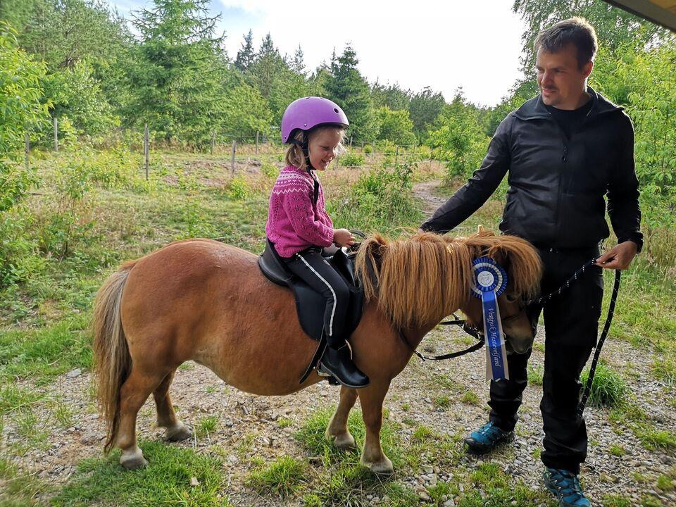 Shetlandspony, hoppe, 8 år