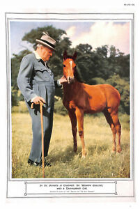 Winston-Churchill-1954-Horse-Colt-Chartwell-Prime-Minister-Politics-Animal-Art