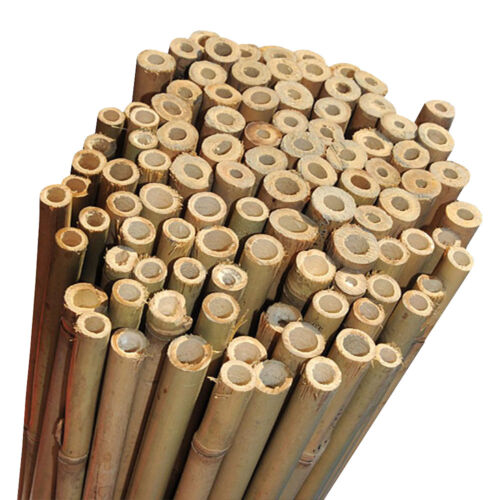6ft Good Quality Strong Bamboo Garden Canes Pack of 100