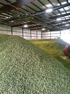 Fresh Hops Styrian Golding Celeia Hops pellet or whole