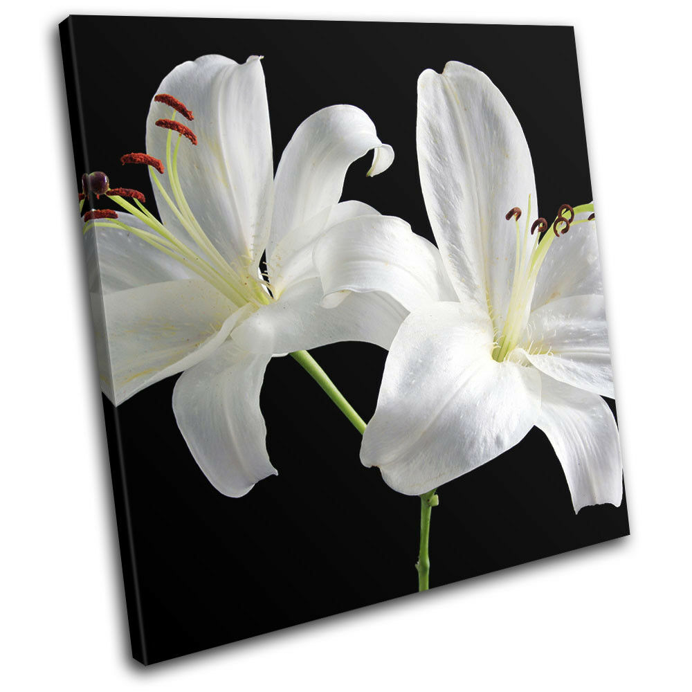 bianca Flowers Contemporary Modern Floral SINGLE TELA parete arte arte arte foto stampa fc0419