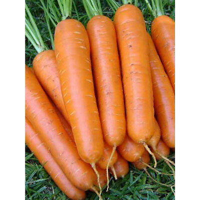 CARROT 'New Kuroda' 125 seeds vegetable garden salad