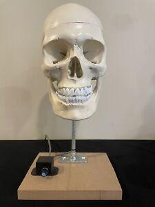 Animatronic Skull- NO SERVOS