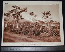 PHOTO 1930 COLONIES FRANCE INDOCHINE LAOS PLANTATION THE / VILLAGE MONTAGNE