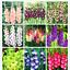 Gladiolus-Fleurs-Bonsai-plantes-rares-Maison-Jardin-Decoration-100-Pcs-Graines-en-pot miniature 1