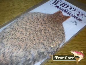 WHITING-FARMS-GRIZZLY-SALMON-SPEY-HACKLE-ROOSTER-CAPE-WHOLE-NEW-TYING-NECK