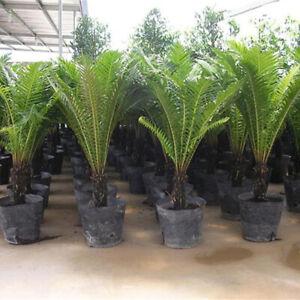 100pcs-Nursery-pot-plastic-nursery-box-garden-container-grow-bag-garden-tool-TB