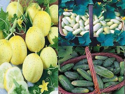 Liveseeds-concombre-crystal lemon 20 graines