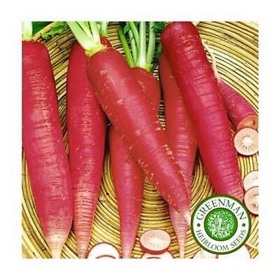 Potager Légumes Plantes 400 Graines de Radis Longue Blanc Icicle