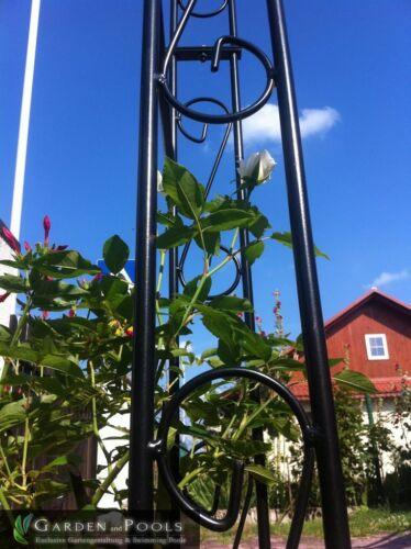 Wandrosenbogen Hollande Lily dentelle 2,60 m halbpergola arc de Rose Métal pergola