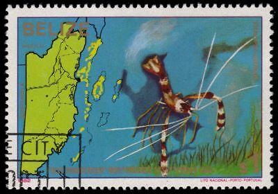 """Belize 650 sg697 - Banded Coral Shrimp """"stenopus Hispidus"""" pa54977"""
