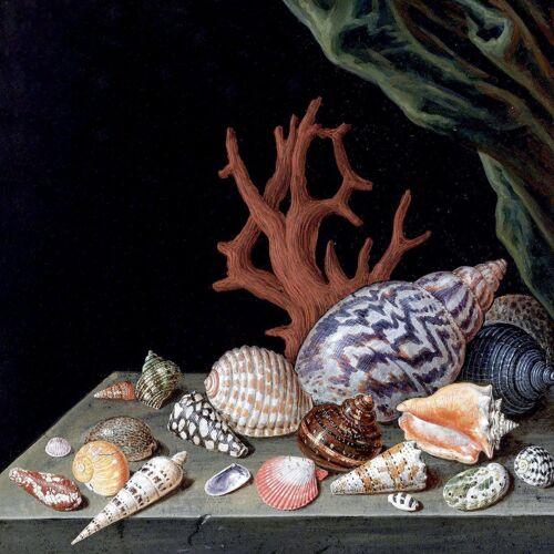 STILL LIFE WITH SHELLS CORAL Accent Tile Mural Kitchen Backsplash Marble Ceramic