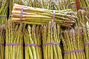Asparagus-Mary-Washington-Non-GMO-Heirloom-Vegetable-Seeds-Sow-No-GMO-USA