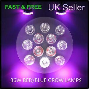 para ChipsEspectro ver Lámpara Detalles Crecimiento de Hydroponics Luz fresco X de 3W Crecimiento Plantas original LED de título 36W12 08OPXwnk