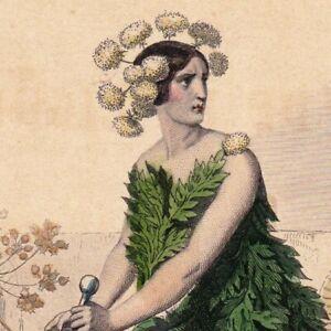 Gravure-XIXe-Cigue-Conium-Maculatum-Cicuta-Chighu-Jean-Jacques-Grandville-1852