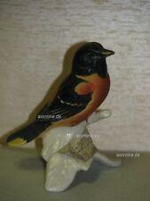 +# A010114_06 Goebel Archiv Malmuster Vogel Bird Baltimore Oriole 38-528
