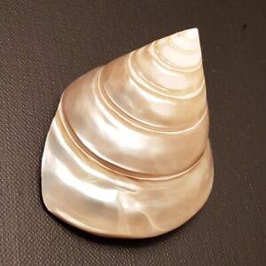 Trochus-Niloticus-Pearl-Seashell-87MM-Tectus-Shell-TE1