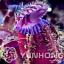 100 Pièces graines CEPHALOTUS Giant Clip VENUS FLY TRAP plantes insectivores Jardin J