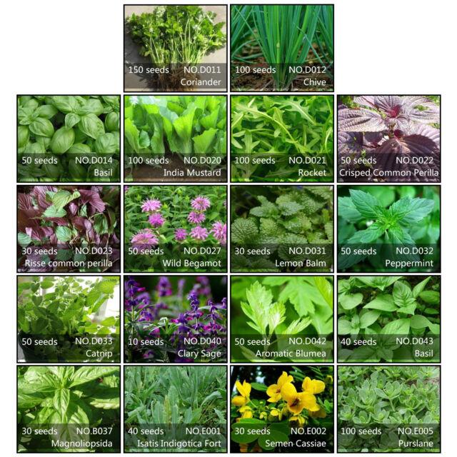 FD1393 Purple Eggplant Seed Vegetable Seed Green Food Hot ~1 Pack 30 Seeds~