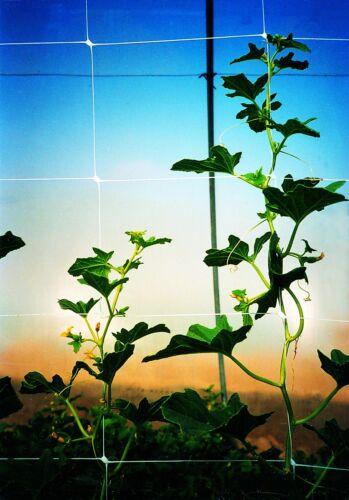 4 x 100/' Tenax 2A150060 Hortonova Plant Trellis Net