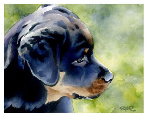 """/""""ROTTWEILER PUPPY/"""" Watercolor Dog Art Print by Artist DJR"""