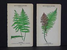 Ferns Botanicals Hand Color, c.1928 Two Prints #01
