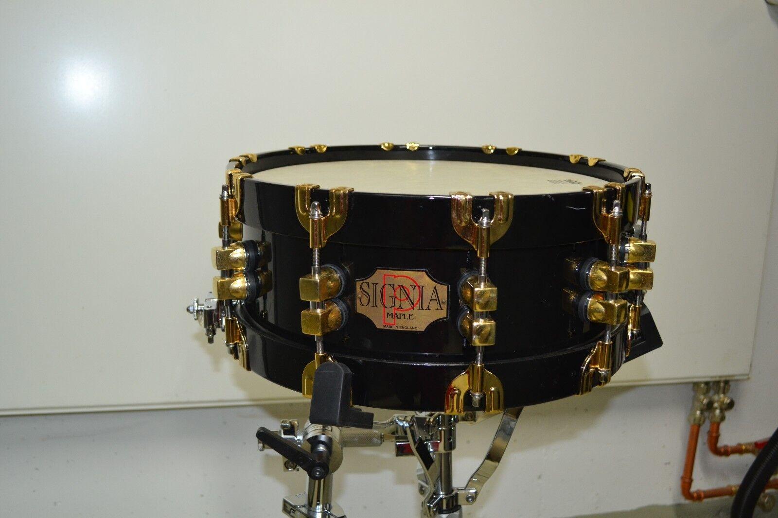 Premier Signia Maple Gold 5,5x14  schwarz Holz Snare mit Koffer