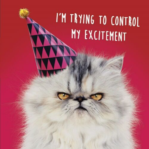Lenticular 3D Birthday Card Funny Grumpy Cat /& Party Hat Greeting Card NEW
