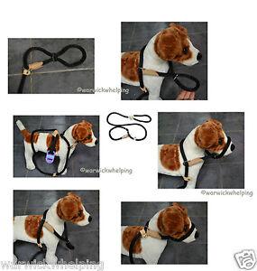 DOG-amp-CO-NYLON-2n1-Soft-Touch-Rope-Lead-Figure-8-Halter-head-collar-or-sliplead