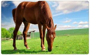 Pferd-auf-Wiese-Tier-Pferde-Himmel-Wandtattoo-Wandsticker-Wandaufkleber-R0480
