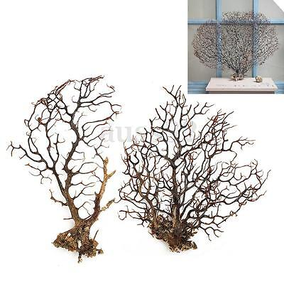 Natural Black Sea Fan Willow Sea Tree Wall Decor Christmas Tree 2 Size