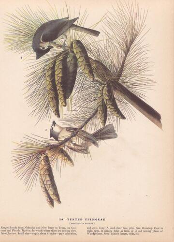 """1942 Vintage AUDUBON BIRDS #39 /""""TUFTED TITMOUSE/"""" Full Color Art Plate Lithograph"""
