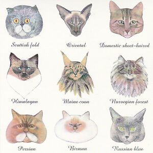 Rare Cats Could Be Different Cat Breeds By Kislyuk Russian Modern Postcard Ebay