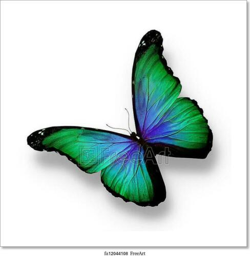 Blue Butterfly Poster Isolated Art//Canvas Print Wall Art Home Decor Green