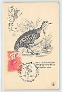 ARGENTINA-MK-1960-FAUNA-VOGEL-BIRDS-MAXIMUMKARTE-CARTE-MAXIMUM-CARD-MC-CM-d9587