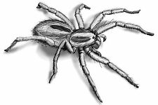 Spider 2 Temporary Tattoos Hairy Big 3D Halloween Transfers Waterpoof Arachnid