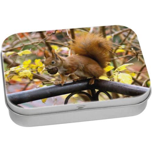 TT008333 /'Red Squirrel/' Tin//Storage Box